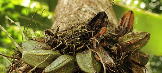 amazon-turtle-lodge-pacotes-buriti-foto-3